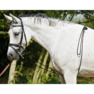 Busse Lunging aid
